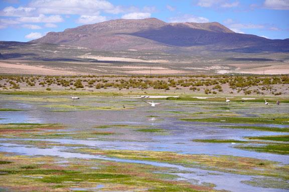 Bolivie, Bolivia 917